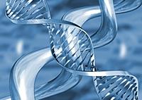 Metallic DNA strands