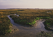 Salt marsh - image courtesy of Peter Wakely