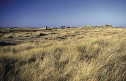 Photograph showing grass covered sand dunes on Holy Island