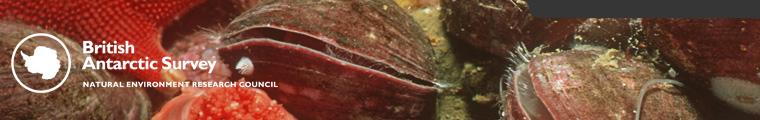 Antarctic brachiopods
