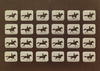 Horses. Running. Phryne L. Plate 40, 1879, from The Attitudes of Animals in Motion,, Eadweard Muybridge, 1881