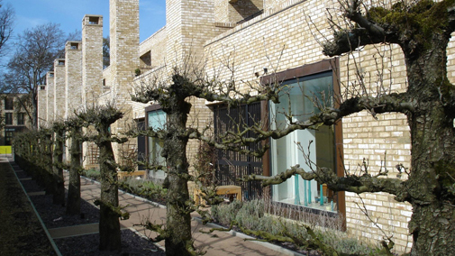 Espalier pear trees - integration of landscape