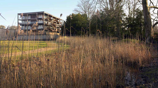 Apartments and reed beds  - sustainability with ecology