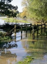 A flooded forest