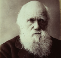 Charles Darwin 1882 - Catalogue reference: COPY 1/56 f767