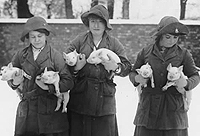 A photo of the members of the Women's Land Army with piglets, Catalogue reference: MAF 59/3