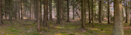 woodland banner image
