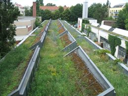 Image of a green roof. Green roofs can play a key part in climate change mitigation and adaptation.