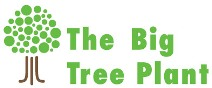 The Big Tree Plant Logo