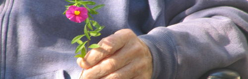 Older person holding pink flower