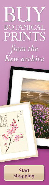 kew framed prints