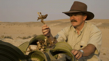 Kew scientist collecting a rare plant specimin from a desert habitat