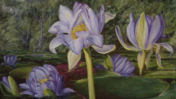 Painting of purple flowers by Marrianne North