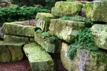 Some of the old rockwork