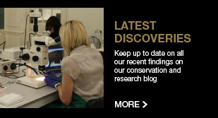 Read our conservation and research blog