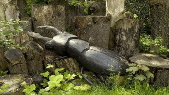 Stag beetle loggery