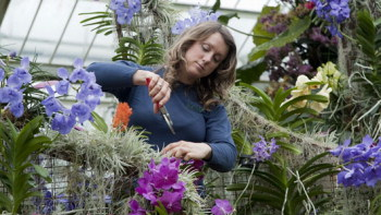 Horticulturist pruning orchids at Kew Gardens