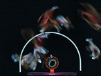 Slow shutter robotic gives unique view of basketball action