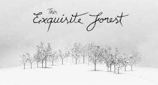 This Exquisite Forest