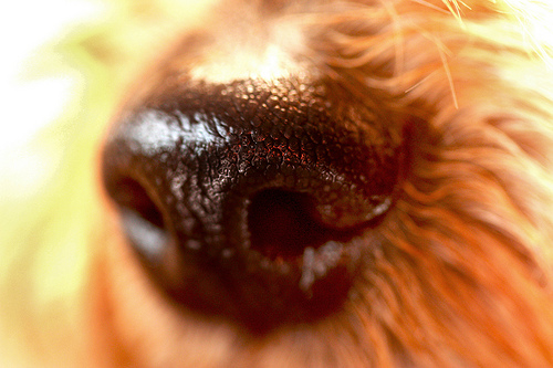 Sniffing out your digital stakeholders
