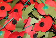 Poppies from the Royal British Legion poppy appeal