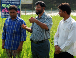 Scientist M.A. Mazid (centre) speaks to onlookers about the success of farmer Mostafa Kamal's (right) flood-tolerant rice trials. Picture: IRRI