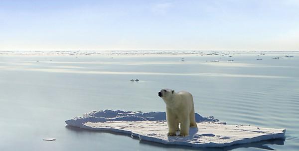 polar bear floating on ice
