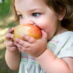 Toddler biting into apple
