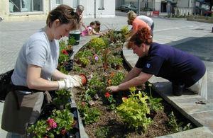 Volunteers planting a flower bed