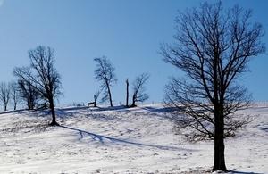 Winter: image courtesy of pocius