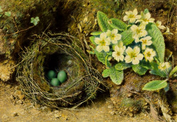 William Henry Hunt, 'Primroses and Bird's Nest' date not known