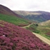 Heather moorland © Natural England