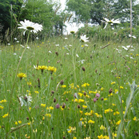 Species rich hay meadow © Natural England