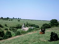 A ruined church viewed for Wolds Way
