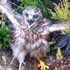 Hen harrier chick © Pete Davies and Thomas Fell
