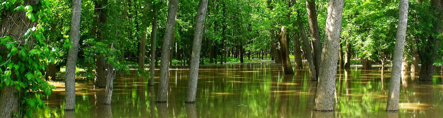 Trees in floodwater