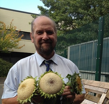 Mel from City Council with his sunflower heads