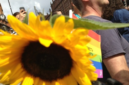 sunflower and rainbow flag