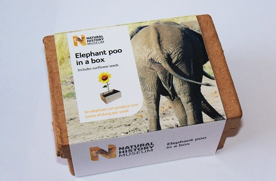 Elephant poo in a box