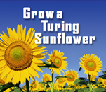 Grow a Turing Sunflower leaflet