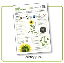 Turing's Sunflowers Counting Guide