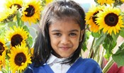A young girl surrounded by sunflowers