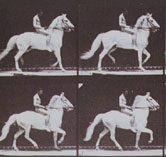 Image: A sequence of photographs taken by Eadweard Muybridge in 1884-1885 of a nude male horse rider
